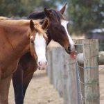 Salt Licks for Horses